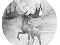 Pen and Ink Elk Drawing Matt Ottley